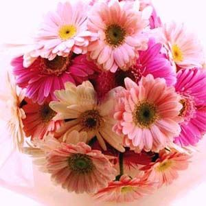 Smiling Wishes : buy flowers online, buy cake online, send flowers, cakes to India