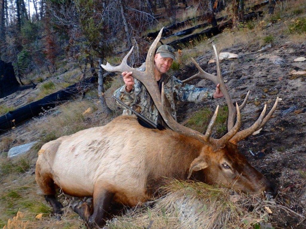 Elk Hunting Colorado Idaho elk hunting, Elk hunting