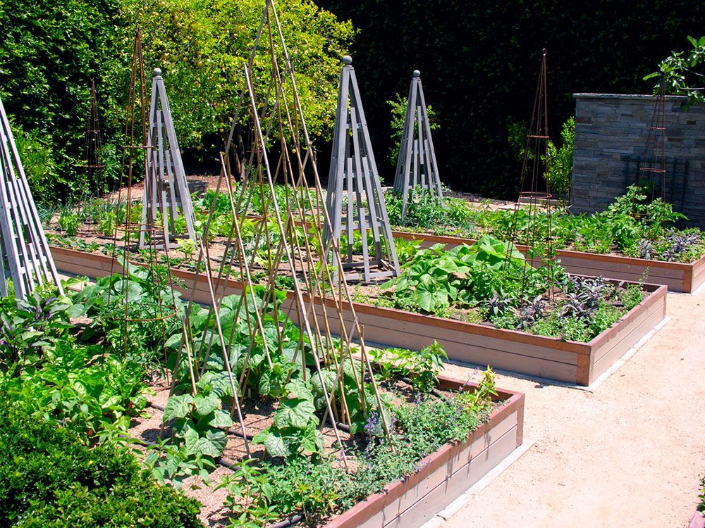 raised garden beds with triangular trellises for vertical support