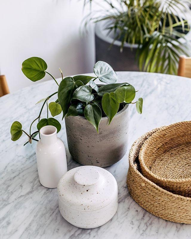 Indoor Pots Online    The Balcony Garden  