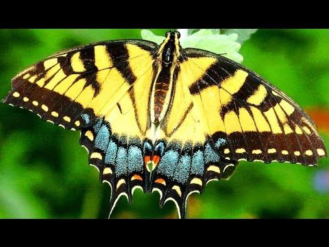 Butterfly as a Totem: Personality Characteristics and Life