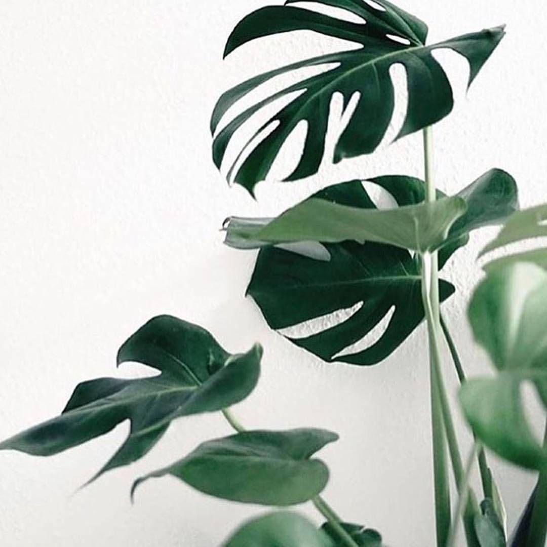 We Love Plants Weloveplantstlv On Instagram Weekend Pic By Greeneventmelbourne Plant Plants Green Leaf Leafs C Plant Aesthetic Plants Green Plants