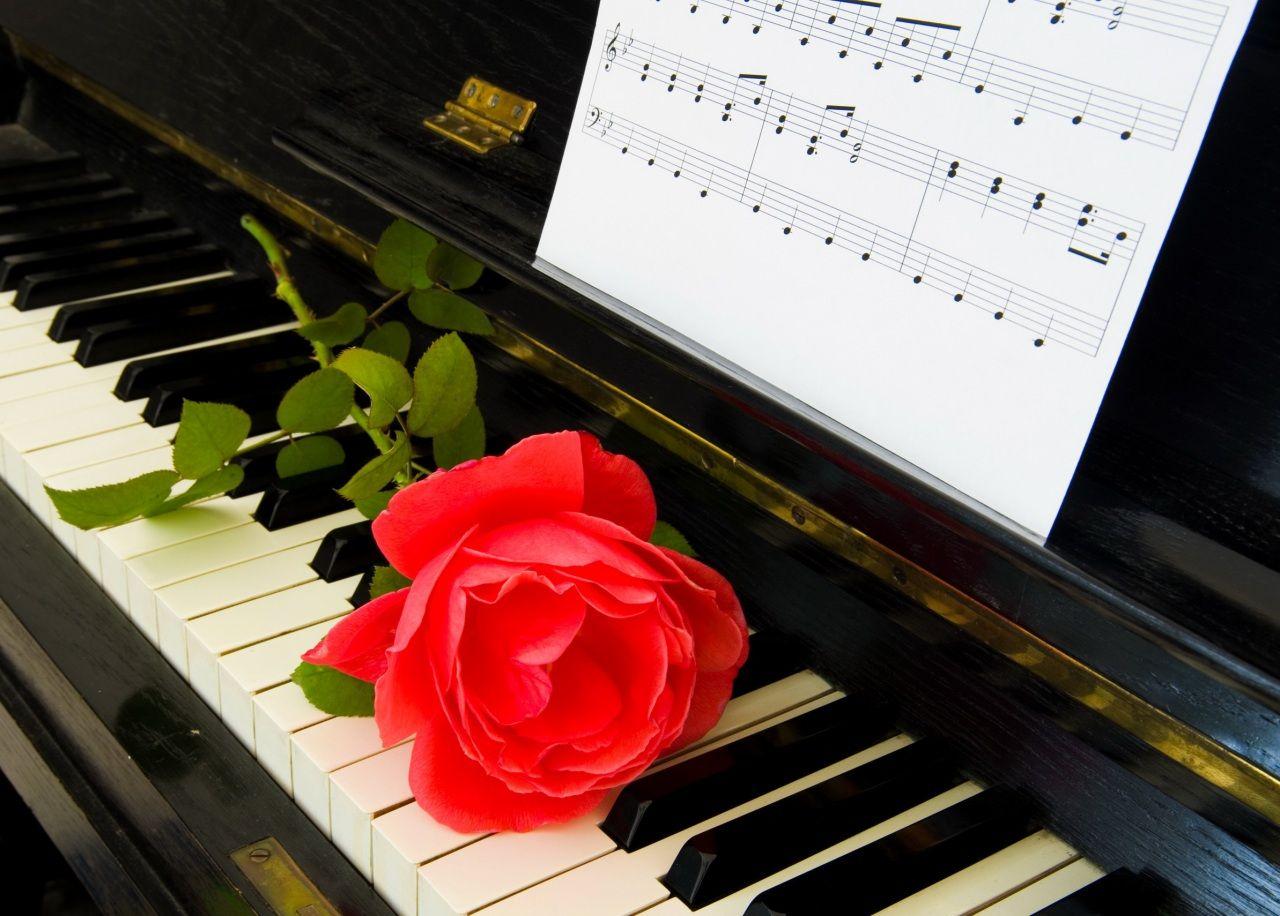 Roses Red Piano Flowers S Izobrazheniyami Rozy Pianino Muzyka