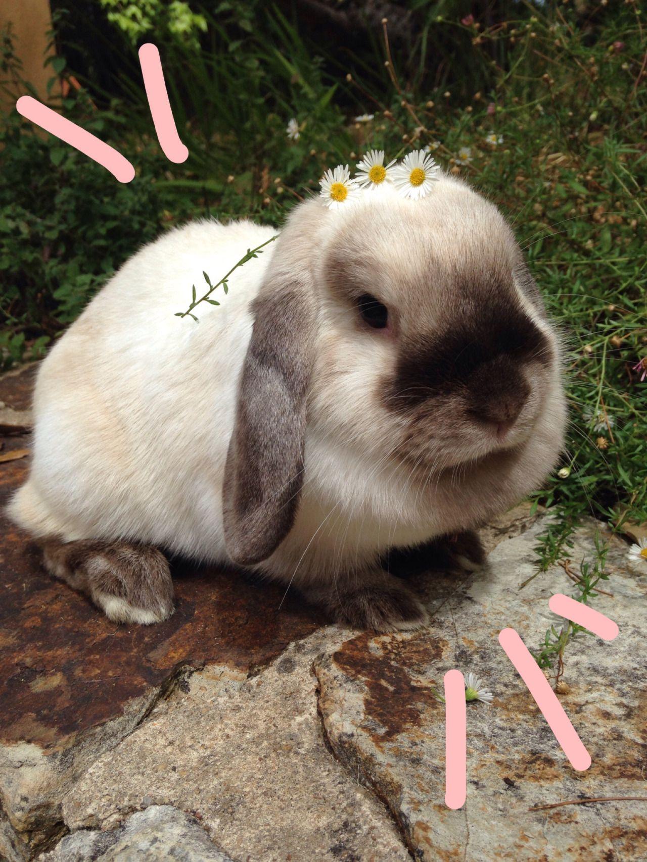 Pin Von Andrea Hahnemann Auf Ostern Susse Tiere Kaninchen Tiere