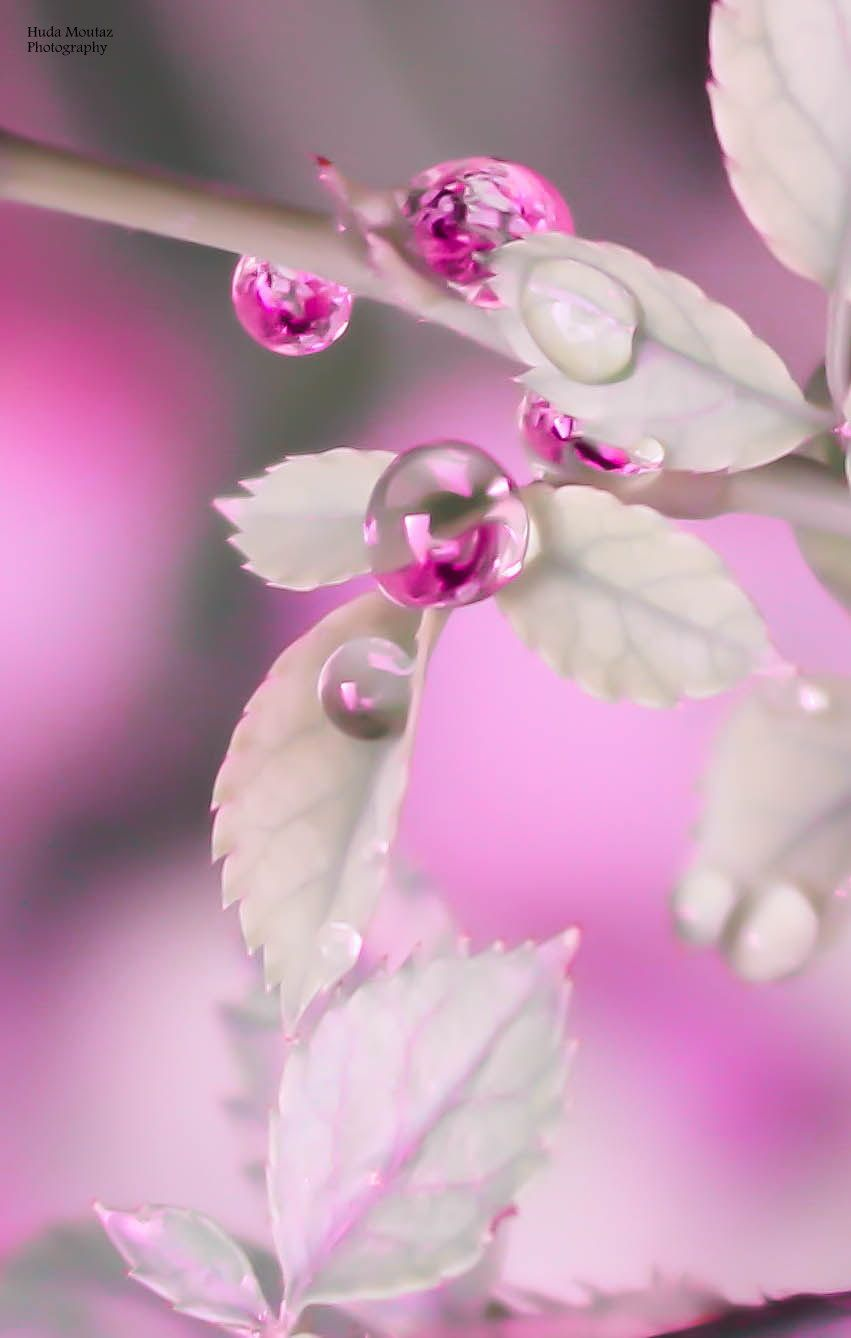 Serenity by Huda  Moutaz on 500px Drops photography