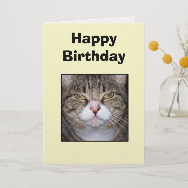 Funny Happy Birthday Cat Greeting Card Cats Catlovers Catgreetingcards Catchristmascards Ilovemycat Ilovecats Feline Cute