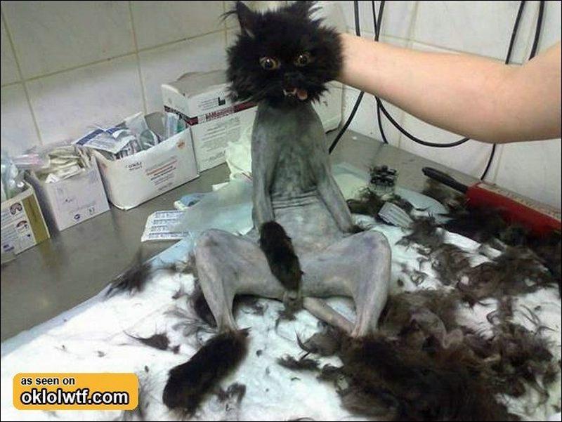 OMG that poor cat!! Please everyone stop animal cruelty