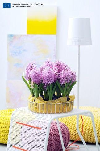 la jacinthe a chaque mois sa plante d cembre jacinthe pinterest jacinthe d cembre et du. Black Bedroom Furniture Sets. Home Design Ideas