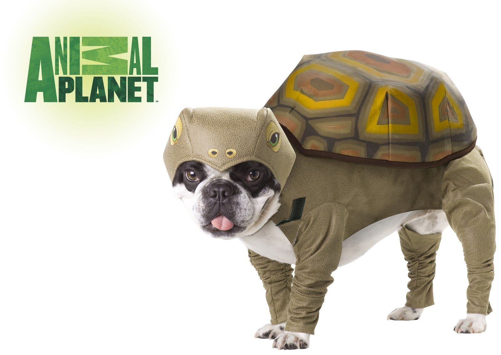 Animal Planet Tortoise Free Shipping Dog Costumes Funny Pet Halloween Costumes Best Dog Costumes