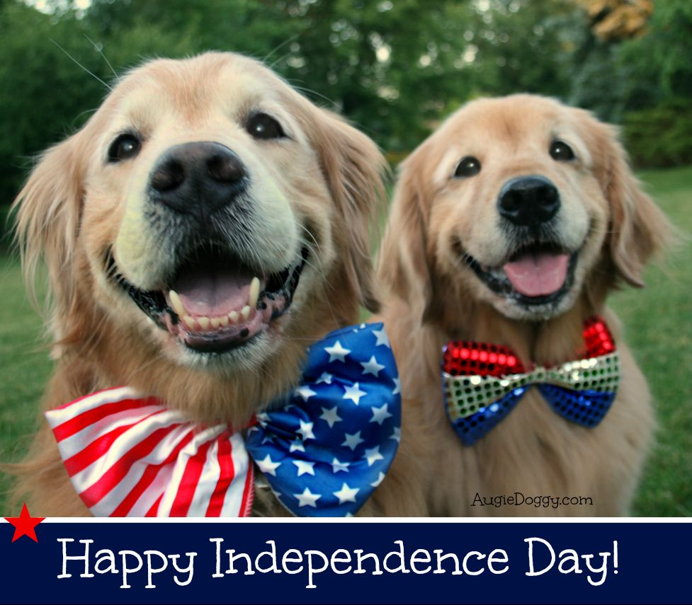 Happy independence day with images golden retriever