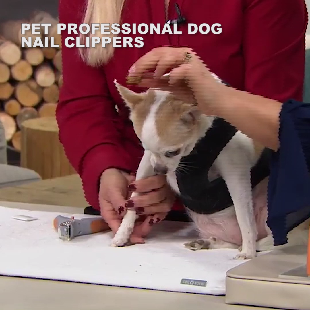 Pet Professional Dog Nail Clippers Video Video In 2020 Hund