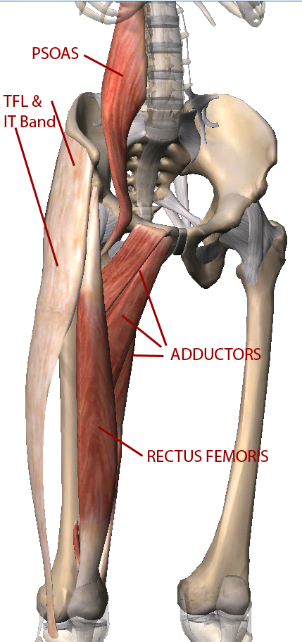 anteriortilterspelvis | Yoga | Pinterest | Anatomy, Muscles and ...
