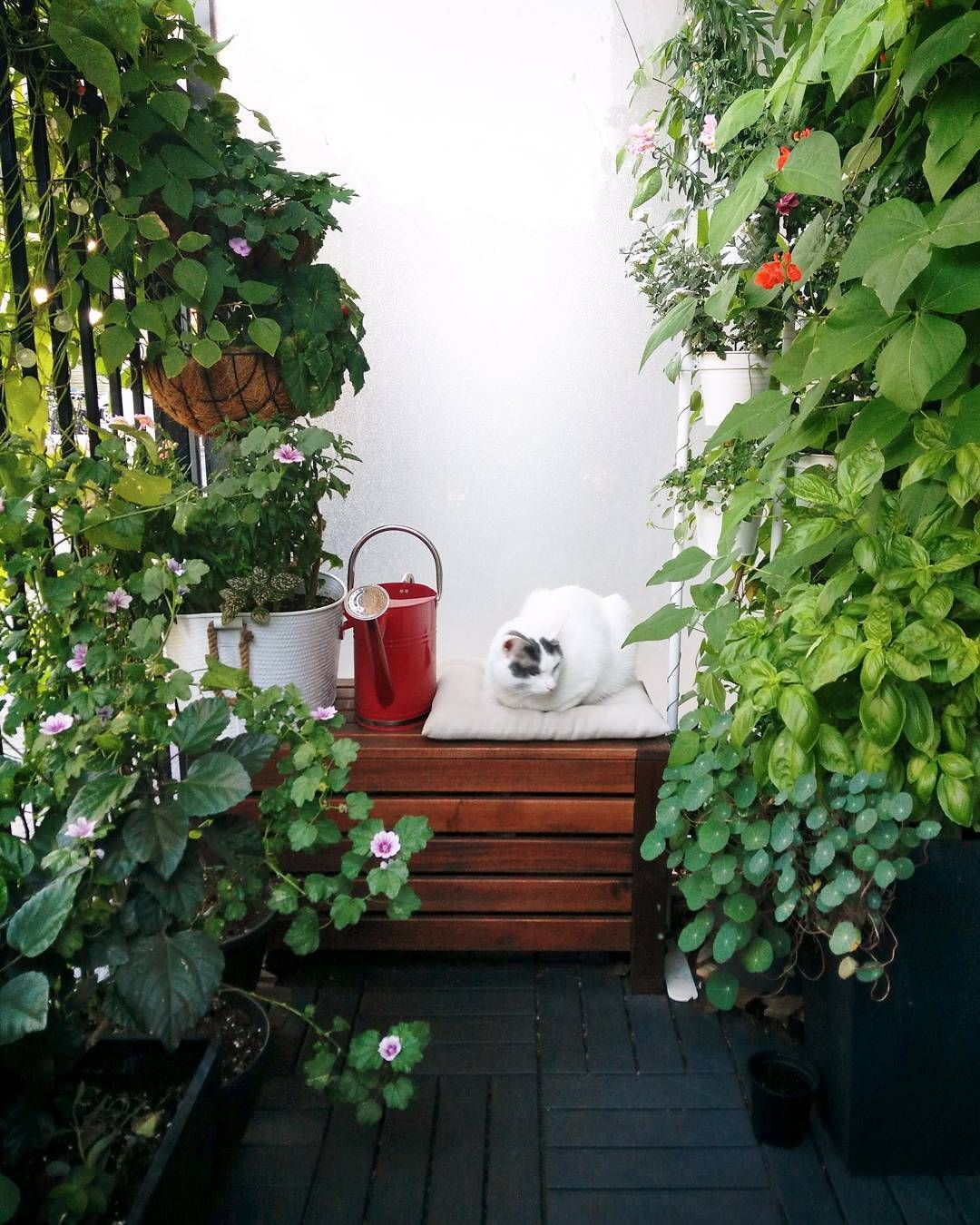 Small space gardening | Living in a green workspace | instagram.com ...
