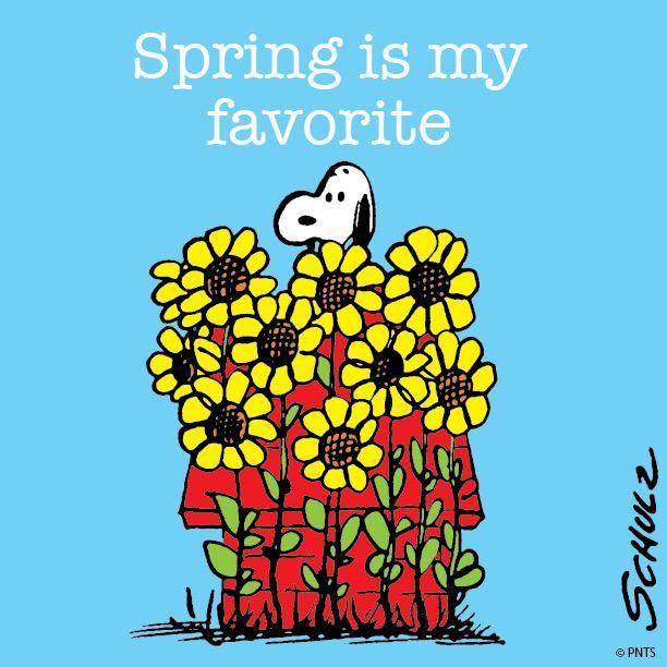 Spring is my favorite