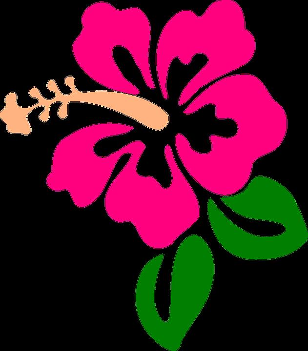 Free Image On Pixabay Hibiscus Flower Tropic Bloom Hibiscus Clip Art Folk Art Flowers Flower Clipart