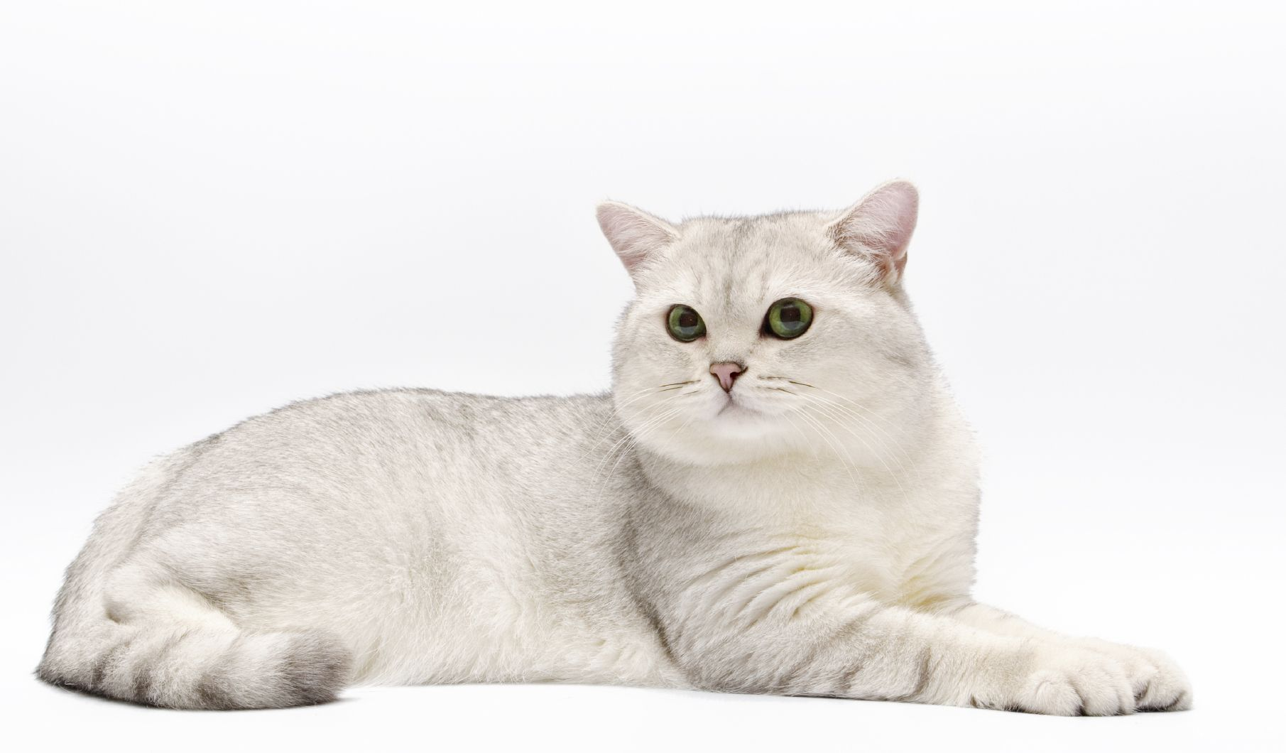 If You Ve Ever Seen A Cat Foam At The Mouth After Riding To The Vet S Office Or Getting A Dose Of Medicine You Know That A Little Cat Drooling Cat Health