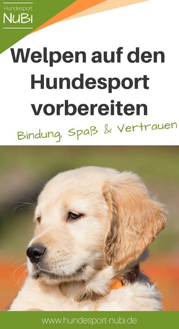 Welpen Und Hundesport Wie Viel Training Ist Sinnvoll