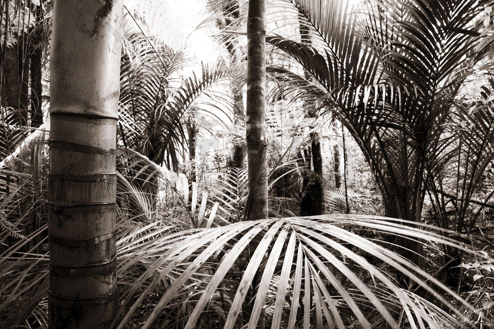 Vegetation - Sepia - Decoration Murale & Papier Peint Photo - Photowall