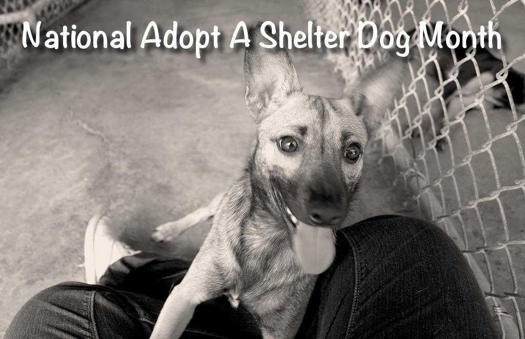 October is National Adopt a Shelter Dog Month. This