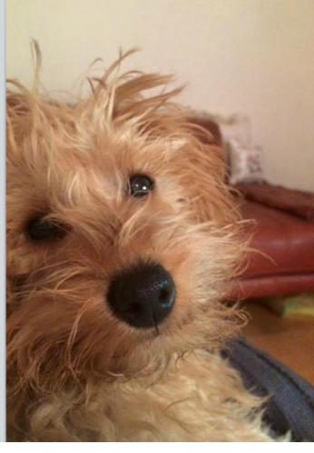 Reunited Ted Is Back Windsor Melbourne Vic Losing A Dog