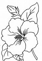 Image Result For Free Watercolor Patterns To Trace Simple Flower