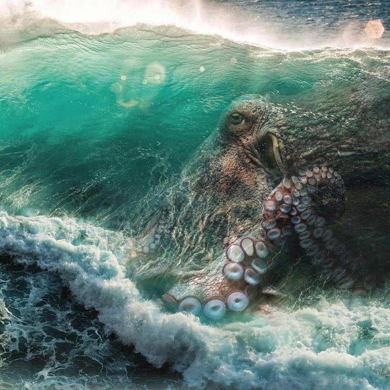 Pin by ER Cristich on Dreamtime Octopus art, Octopus, Art