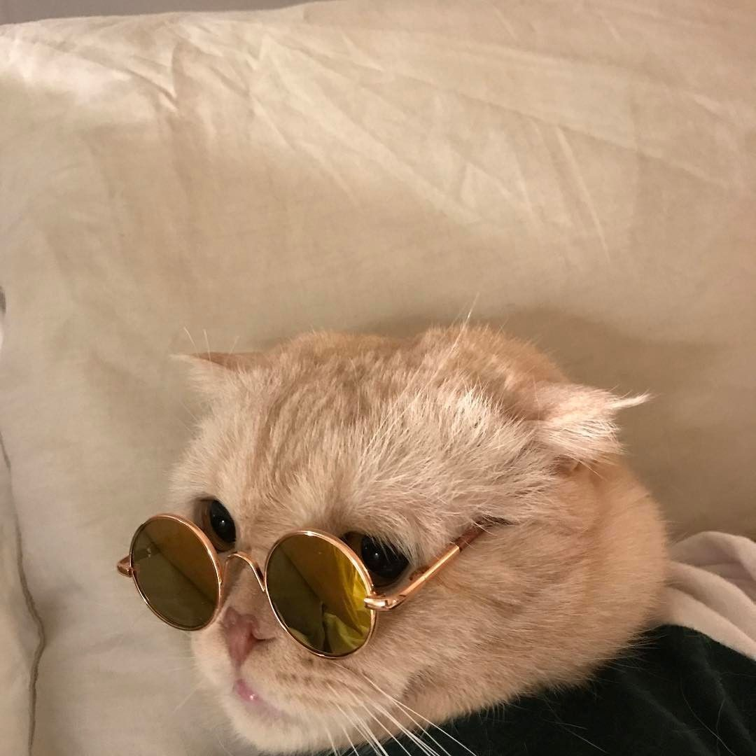 Cat With Round Sunglasses Cooler Than Me Cute Pet Animal Cats Animals Cool Cats