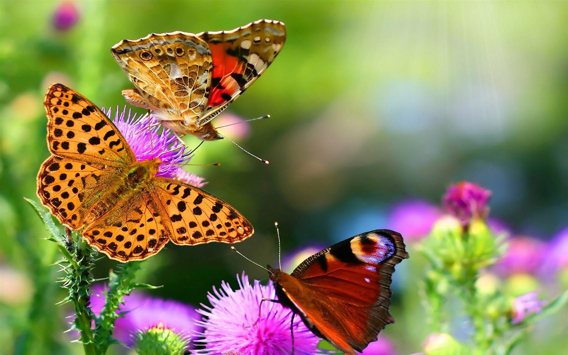 много бабочек фото: 20 тыс изображений найдено в Яндекс ...