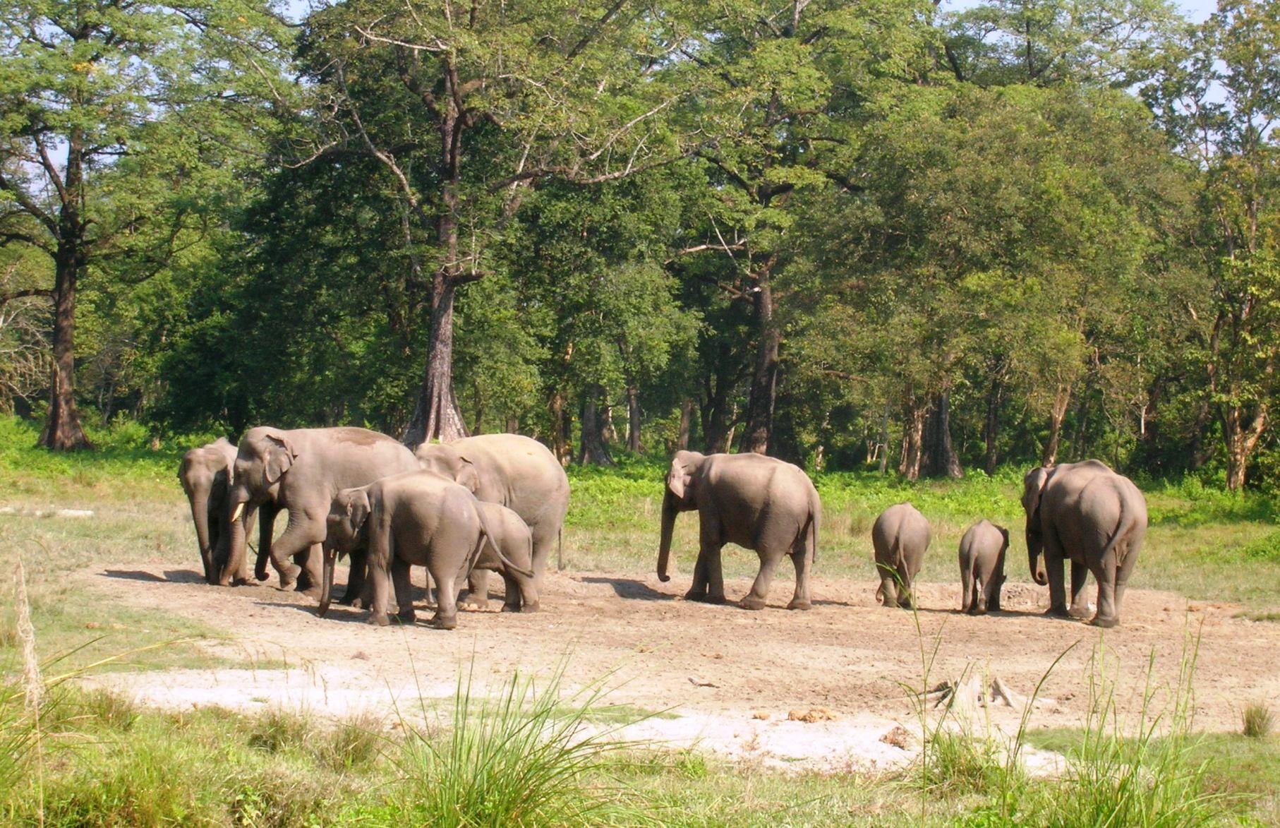 Doars A Treasure In North Bengal Chapramari Forest Beautifulbengal Mustvisit Herd Of Elephants Wildlife Sanctuary Wildlife