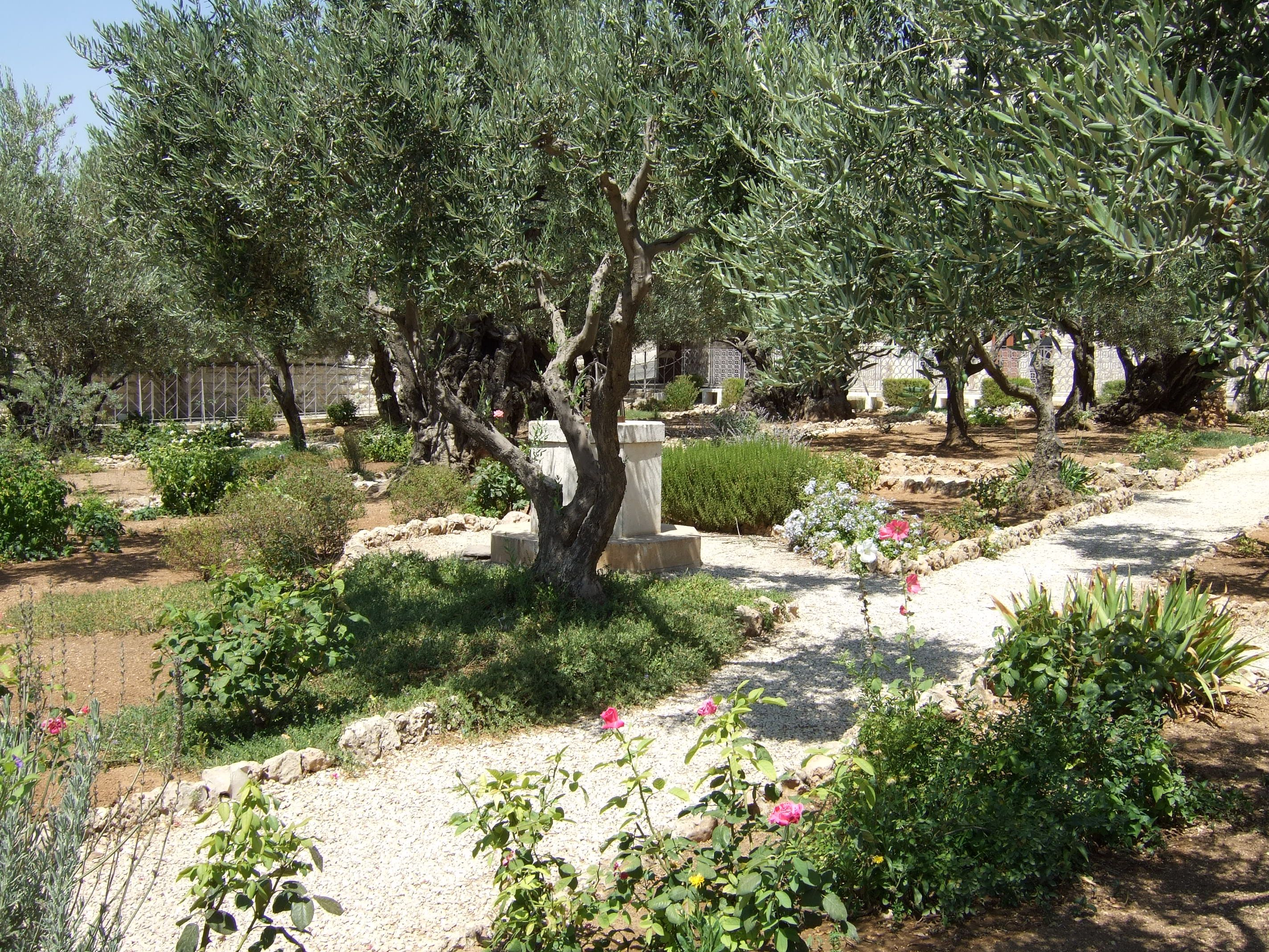 The land of milk and honey israel jerusalem and buckets for Age olive trees garden gethsemane