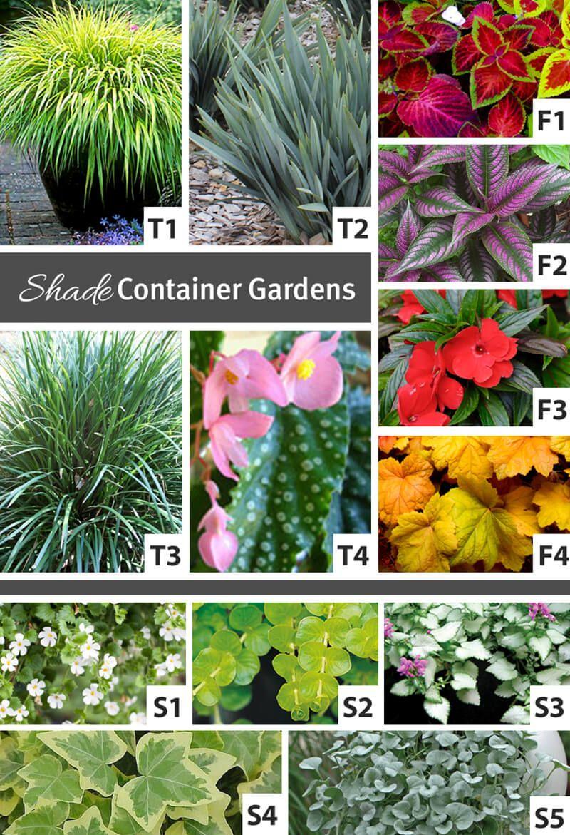 Container Gardening Backyard Arizona Container Gardening