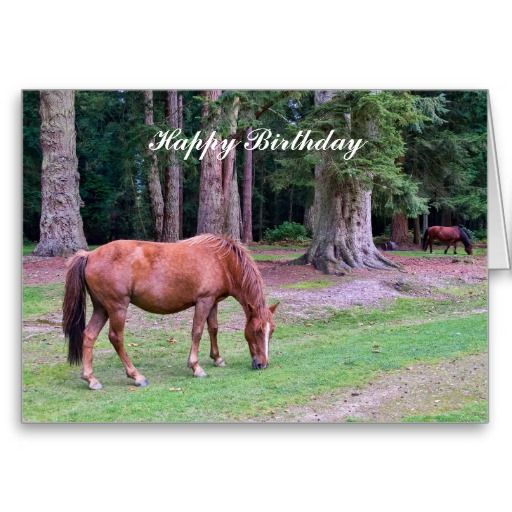 New Forest Pony - Birthday Card