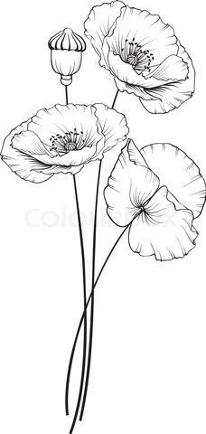 Kotkoa Fotos Illustrationen Und Video Colourbox De Blumenzeichnungen Blumen Zeichnung Wie Man Blumen Malt