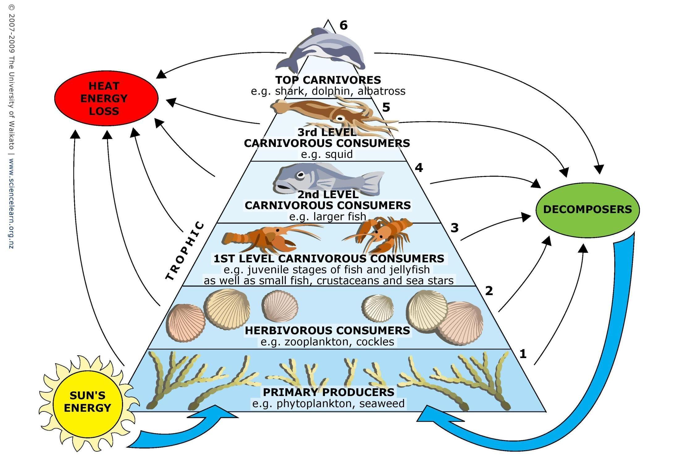 Build A Marine Food Web