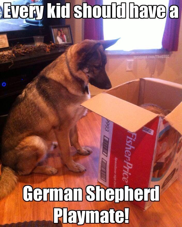 The German Shepherd Uploaded by user