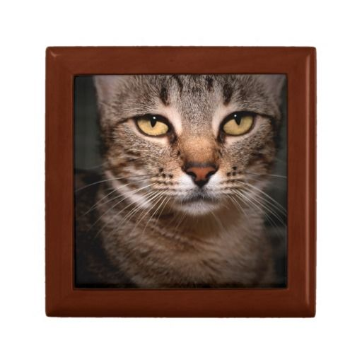 BROWN TABBY GIFTBOX TRINKET BOXES