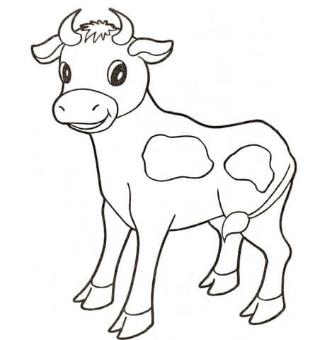 Baby cow Coloring page drawing