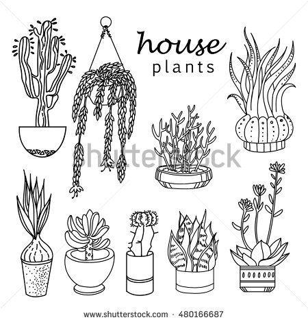 Pot Plant Drawing