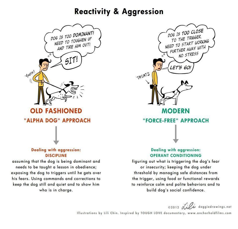 50 Infographic About Dog Training Aggressive Dog Dog Training