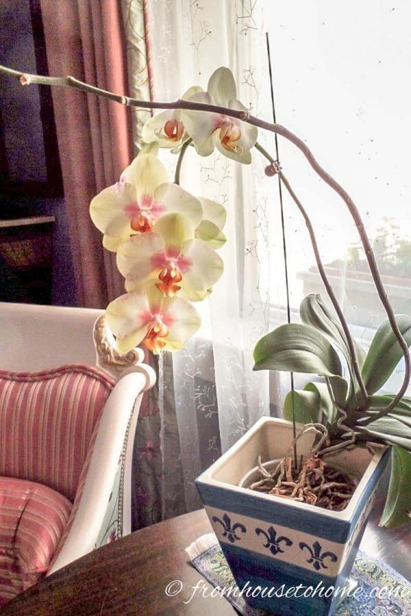 7 Surprising Things You Didn't Know About Caring For Orchids – Orchid care