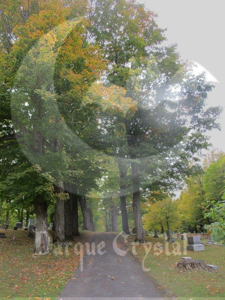 Bayside Halloween 2020 Bayside Cemetery Spooky Landscape Photo #41 in 2020 | Landscape