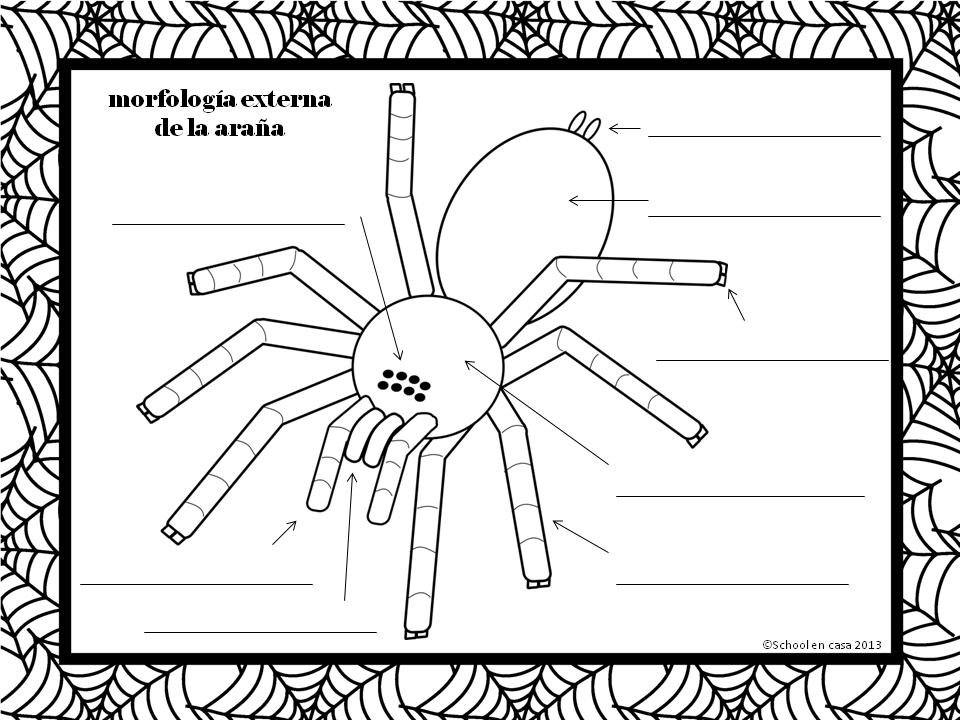 Simple diagram to label external spider morphology 100 in spanish simple diagram to label external spider morphology 100 in spanish includes answer key free ccuart Image collections