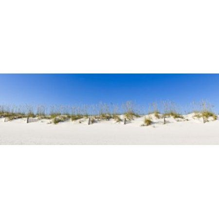 Sand dunes on Gulf Of Mexico Orange Beach Baldwin County Alabama USA Canvas Art - Panoramic Images (18 x 6)