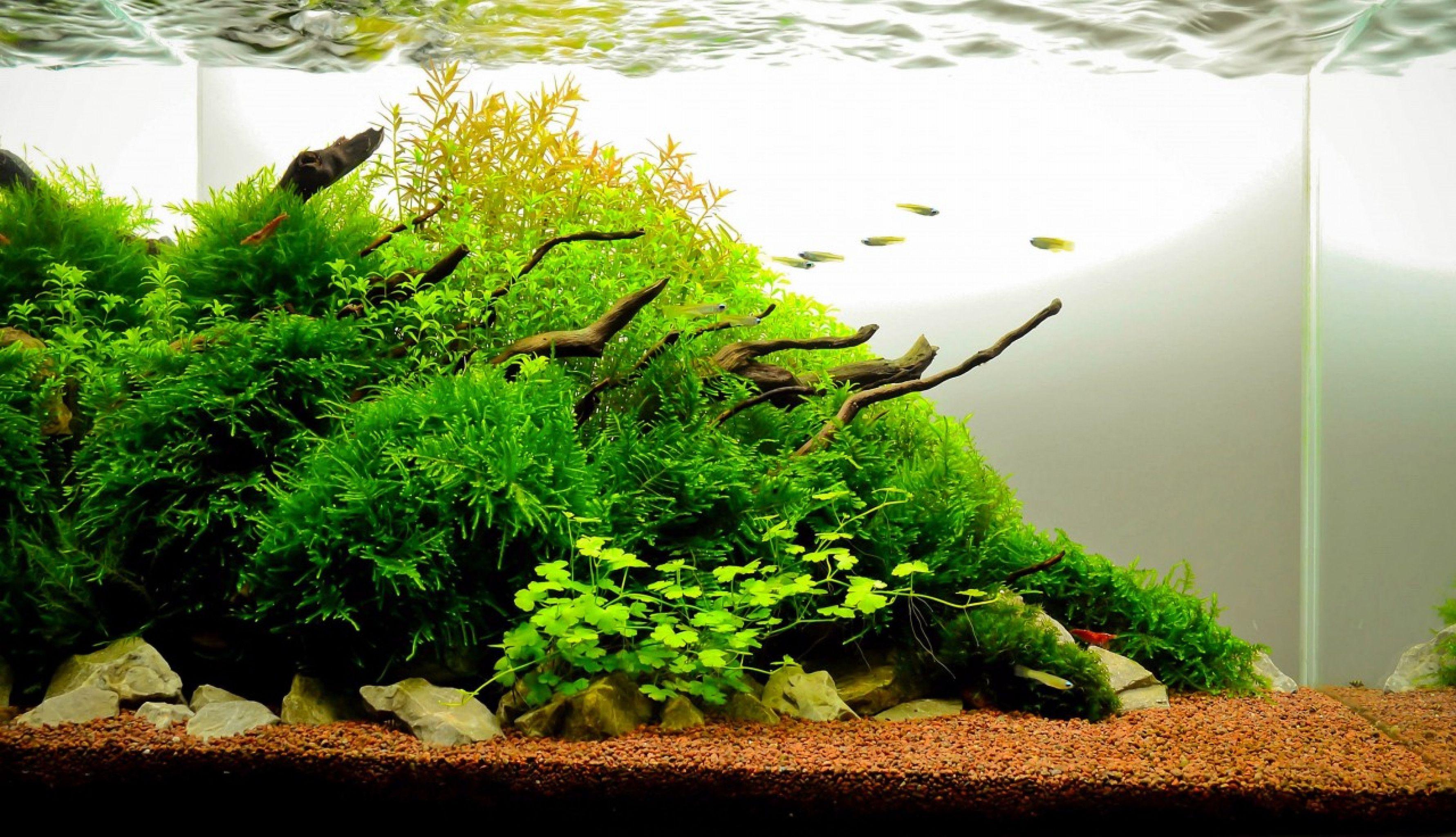 Image Result For 10 Gallon Aquascape Aquascape Planted Aquarium Aquascape Aquarium