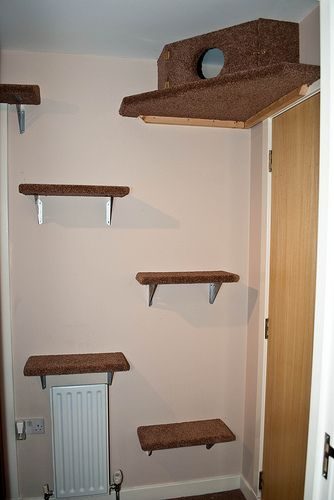 tricia s cat playground for da manimals pinterest cat rh pinterest com homemade cat wall shelves Cat Climbing Shelves