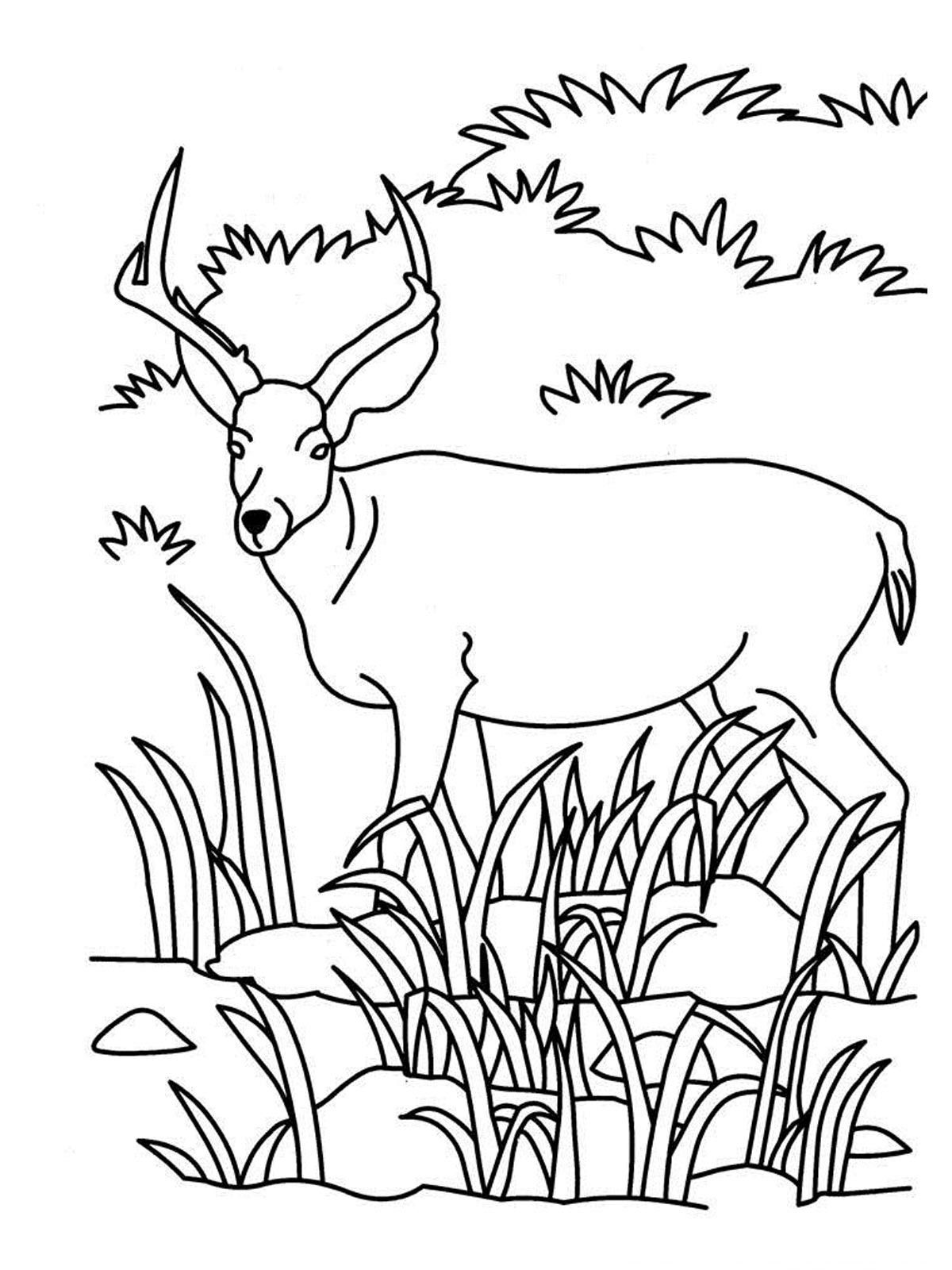 Watching Realistic Antelope Kids Coloring Pages Printable | Coloring ...
