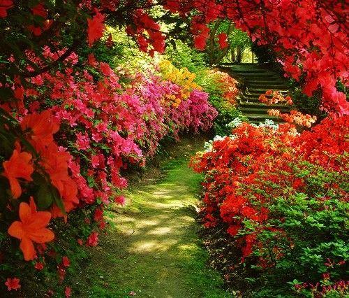 beautiful flower garden path - Flower Garden Path