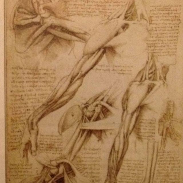 Leonardo Anatomy Drawing Anatomy Pinterest Anatomy Drawing