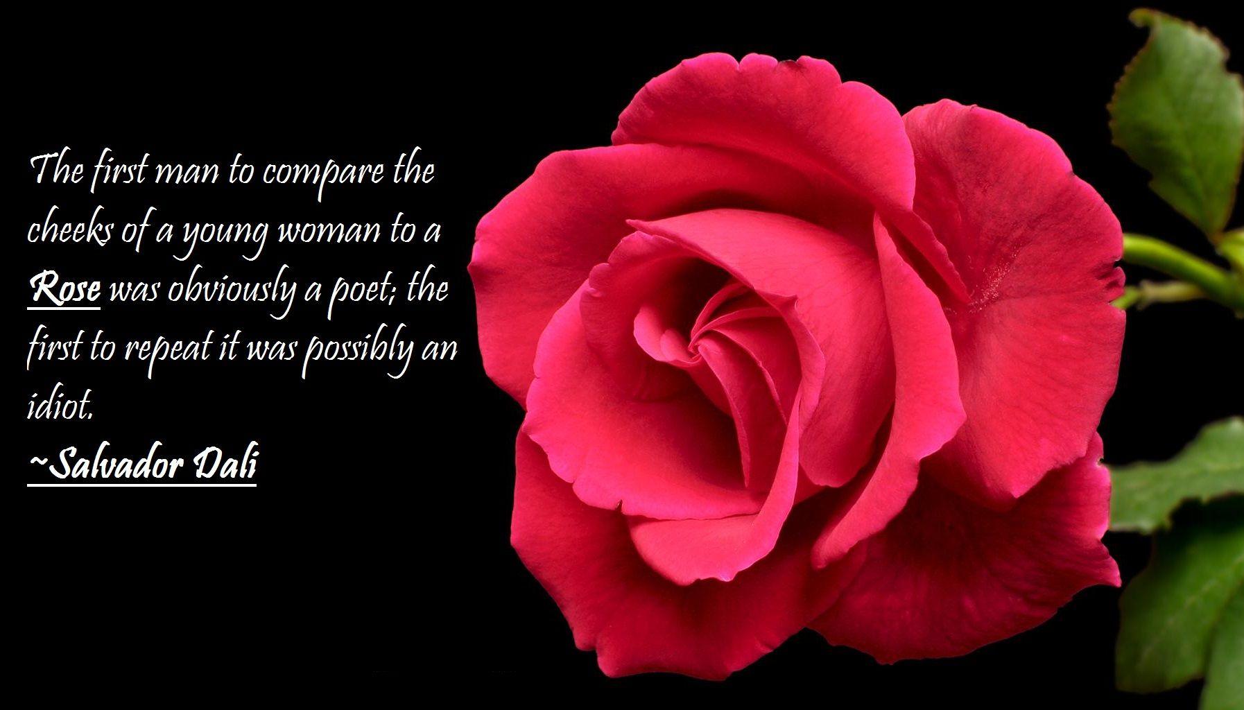 rosepicsandquotes7.jpg 1,794×1,024 pixels Rose