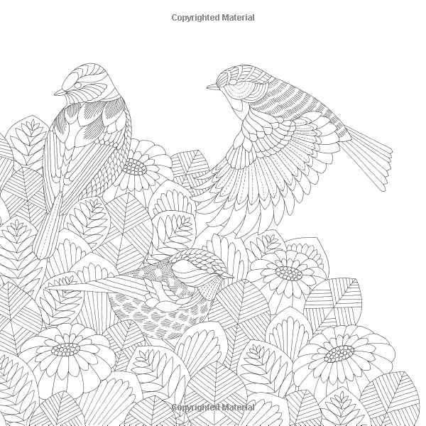 Beautiful Birds and Treetop Treasures: Amazon.ca: Millie